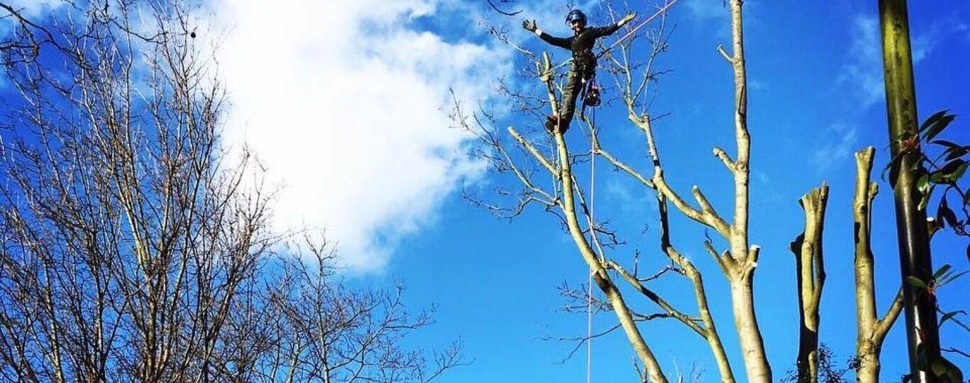 Tree Surgery South Devon