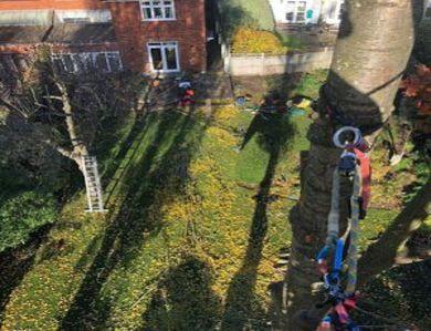 Tree Surgeons Hammersmith